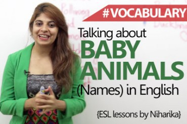 Baby Animals names in English.