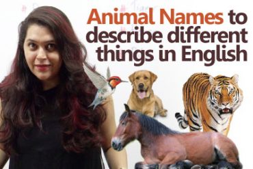 Animal names to describe different things in English.