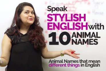 Learn Multiple English Expressions with '10 Animal Names'