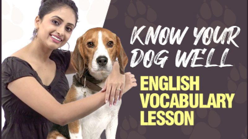 English Vocabulary Lesson – Dogs 🐶 | Know Your Dog Well! 🐾 | Body Parts Names